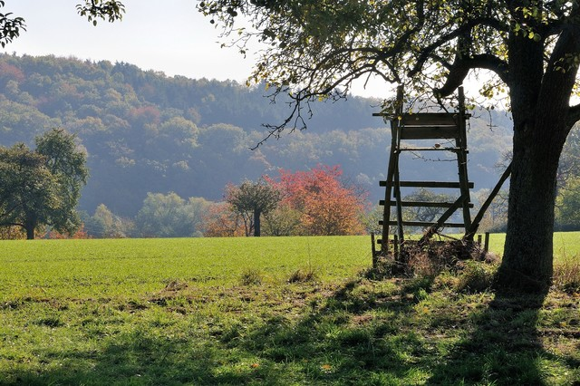 Main-Taunus-Kreis - Taunuswald